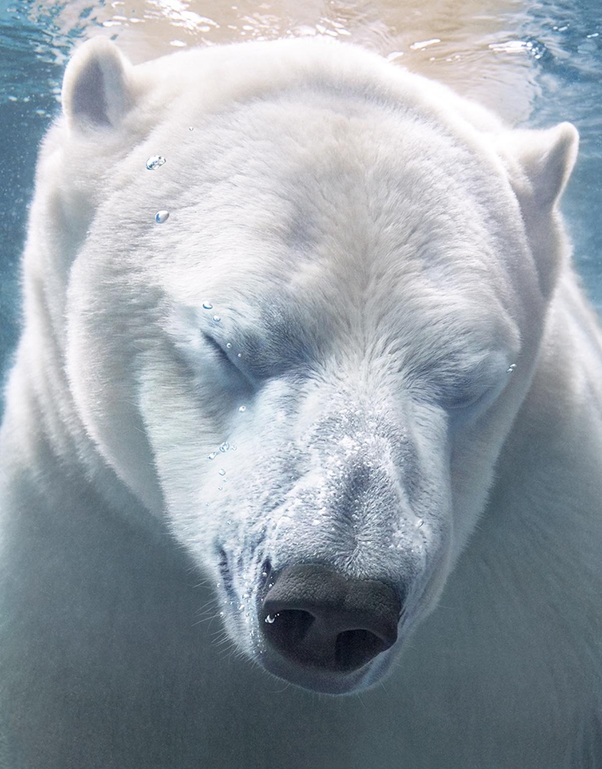 Zdjęcie misia z zamkniętymi oczami pod wodą