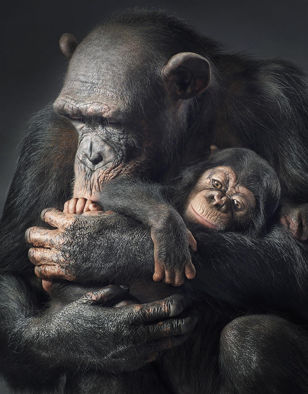 Zdjęcie dorosłej małpy, przytulającej małą
