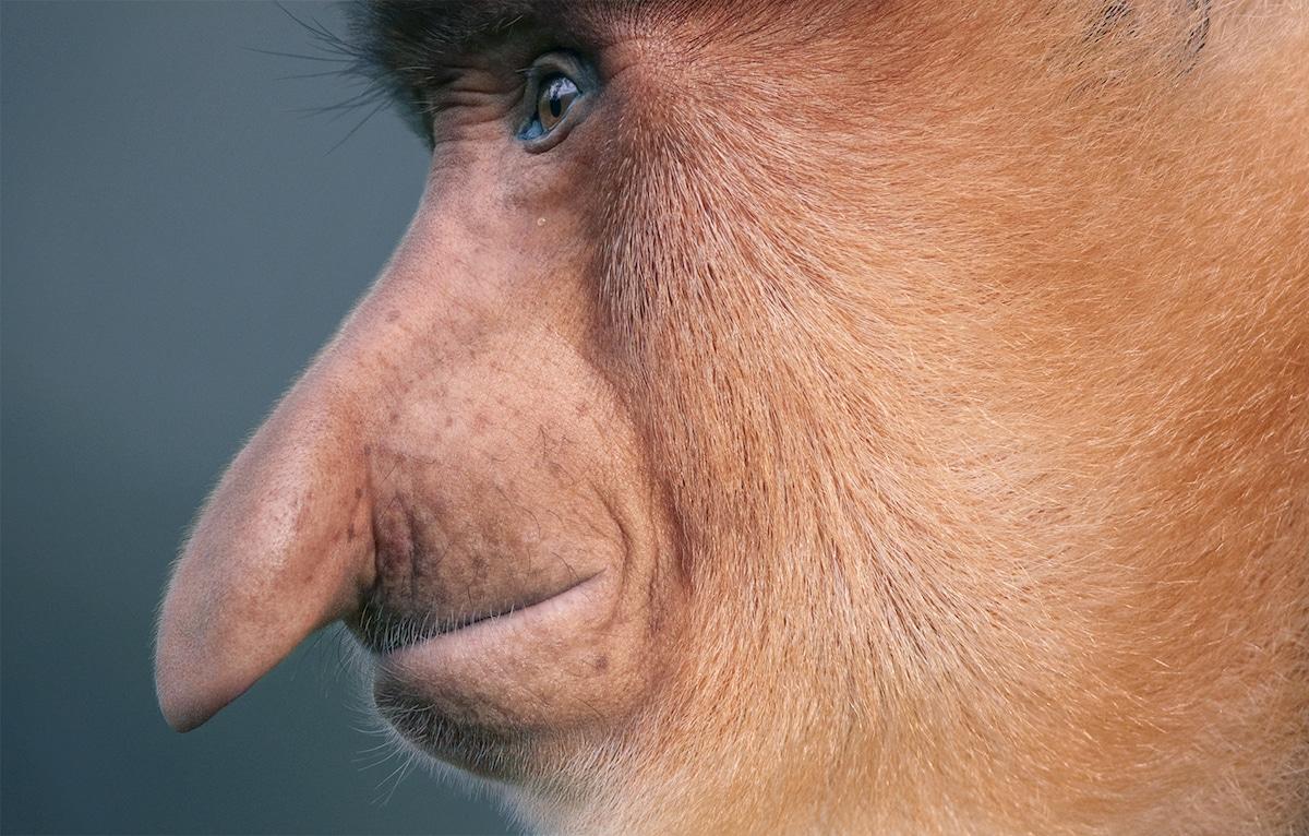 Zdjęcie małpy siedzącej profilem do obiektywu
