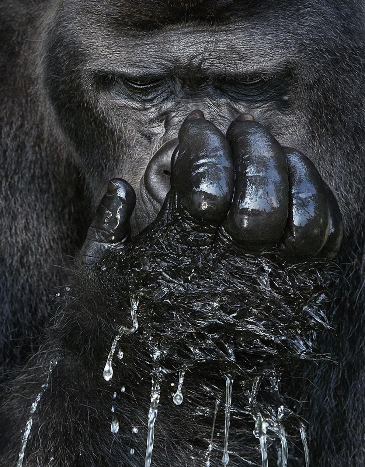 Zdjęcie małpy z łapą przy twarzy