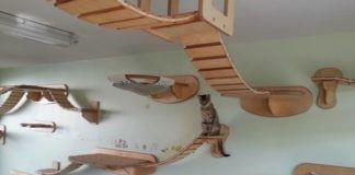 Kot na podwieszanym kocim placu zabaw