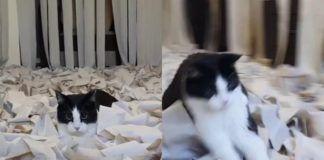 Kot w pokoju pełnym papieru toaletowego