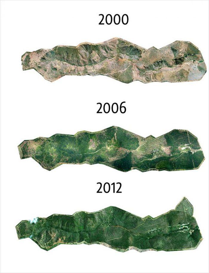 Mapa pokazująca stan zalesienia