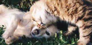 Kot przytulający się do pieska