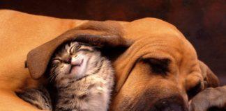 Pies i kot śpiący obok siebie