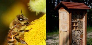 Pszczoła na kwiatku i ul