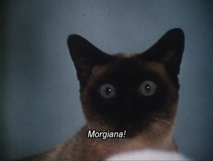 Kot z wytrzszczonymi oczami