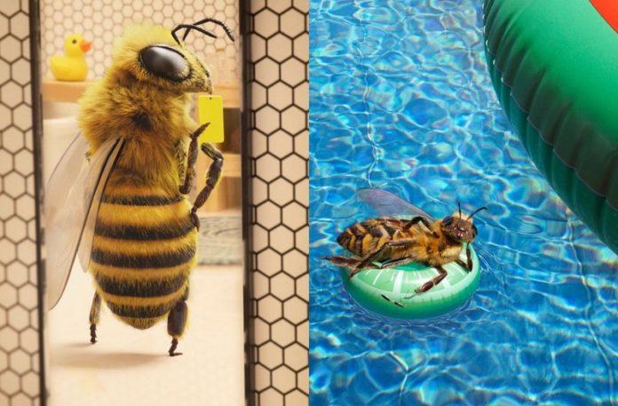 Pszczoła pozująca do zdjęcia