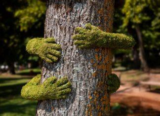 Drzewo otoczone ramionami pokrytymi mchem