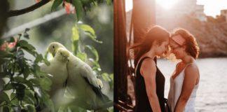 Przytulające się papugi i kobiety trzymające się za ręce