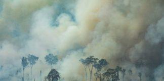 Płonące lasy