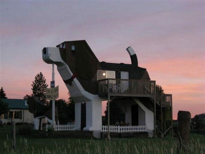 Dom w kształcie psa