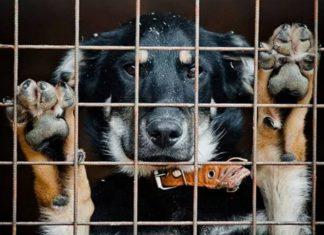 Pies w schronisku