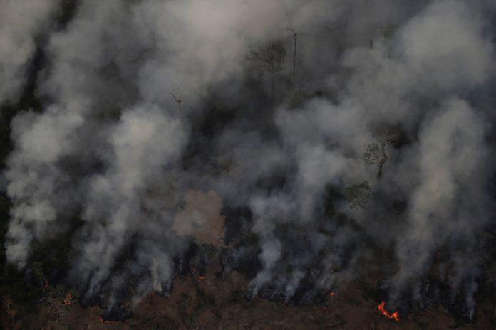 Płonący las. Unoszący się dym.