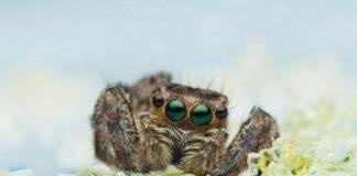 Zdjęcie przedstawiajace pająka