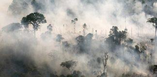 Zdjęcie płonących lasów
