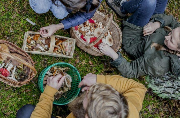 Zdjęcie przedstawiające ludzi z koszykami pełnymi grzybów