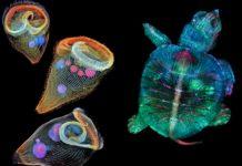 Dwa mikroskopijne zdjęcia