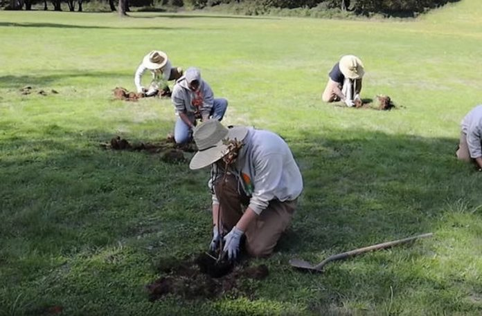 Ludzie sadzący drzewa