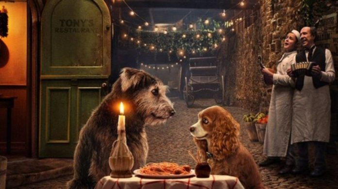 Dwa psy siedzące przy talerzu spagetti