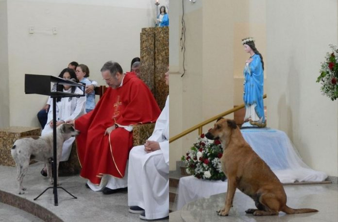 Dwa zdjęcia przedstawiające księdza odprawiającego mszę i towarzszące mu psy