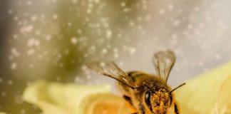 Pszczoła siedząca na kwiatku