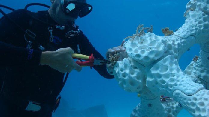 Mężczyyzna dopinający do koralowca sztuczny fragment