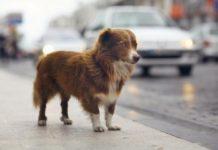 Porzucony na chodniku pies