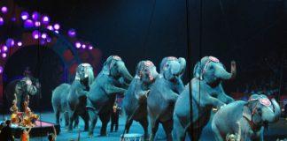 Zwierzęta w cyrku
