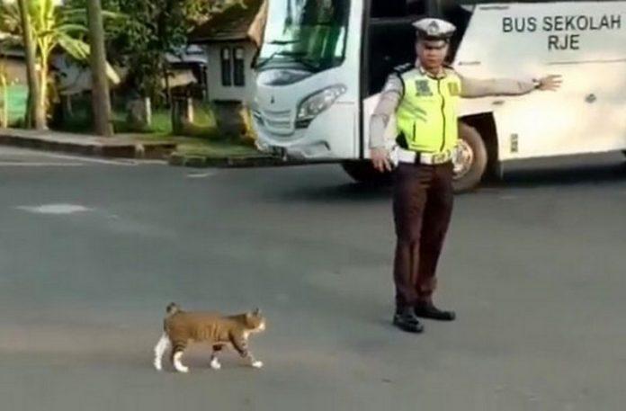 Policjant przeprowadzający kota przez jezdnię