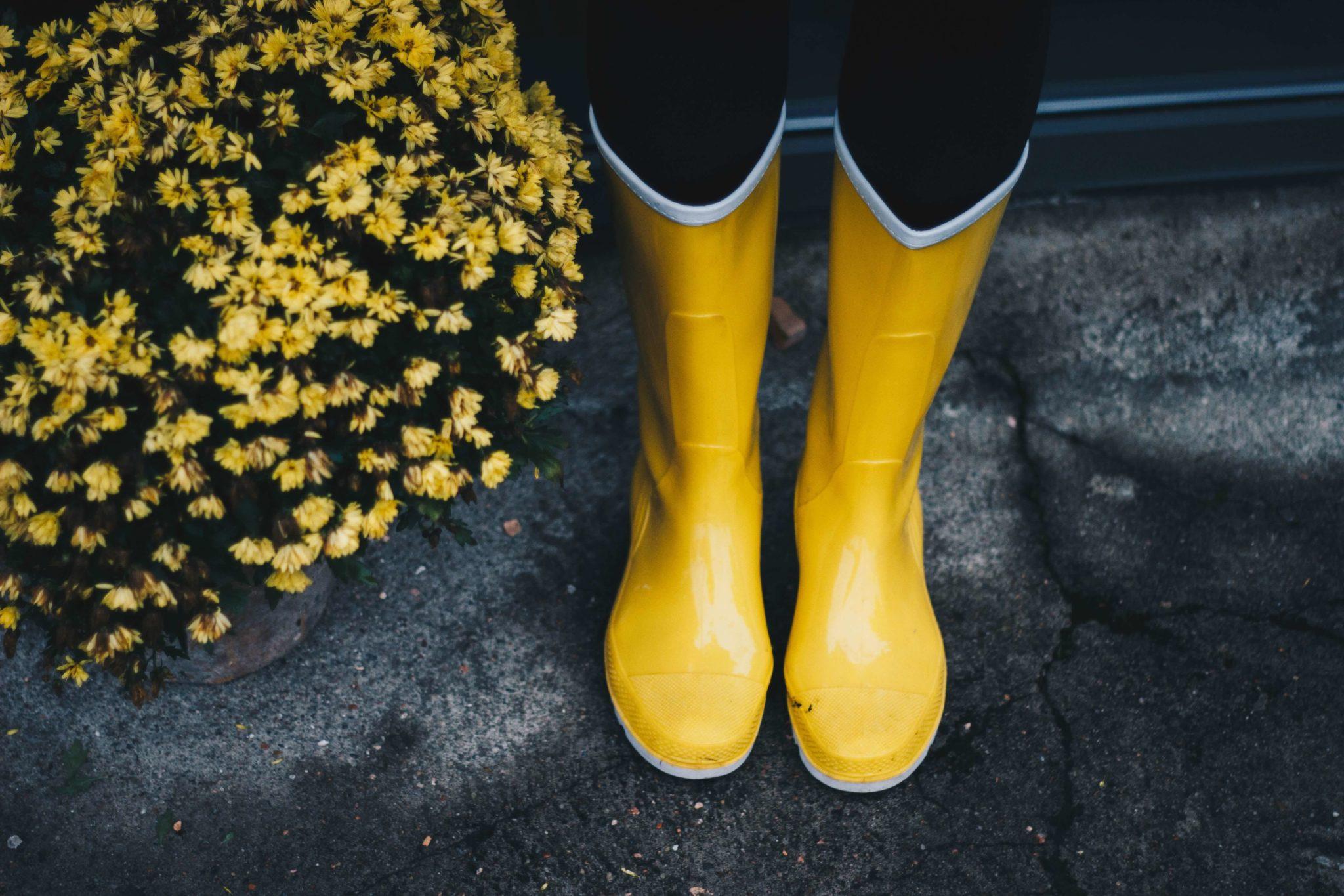 Żółte gumowce i żółte kwiaty